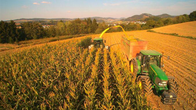 4000 Tonnen Mais wurden in diesem Jahr siliert: 70 Hektar Fläche bewirtschaften die Gesellschafter der Biogasanlage. Dazu kommt Mais aus Überschüssen anderer Landwirte.