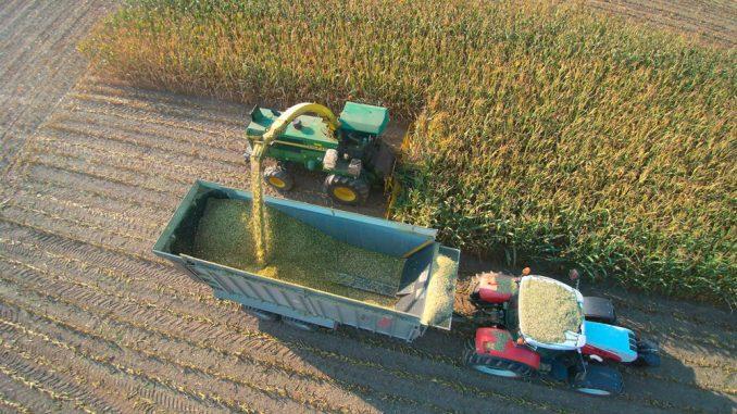 Oktober ist für gewöhnlich der Erntemonat für Mais. Die Ernte auf den Gesellschafterflächen wird vom Biogaswerk zentral organisiert.